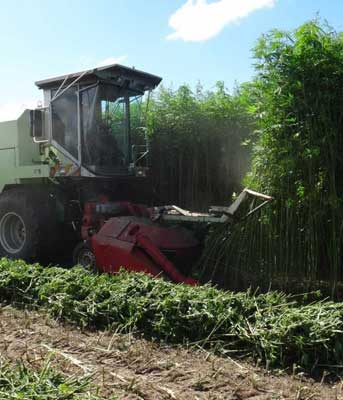 Hemp Harvesting Machine